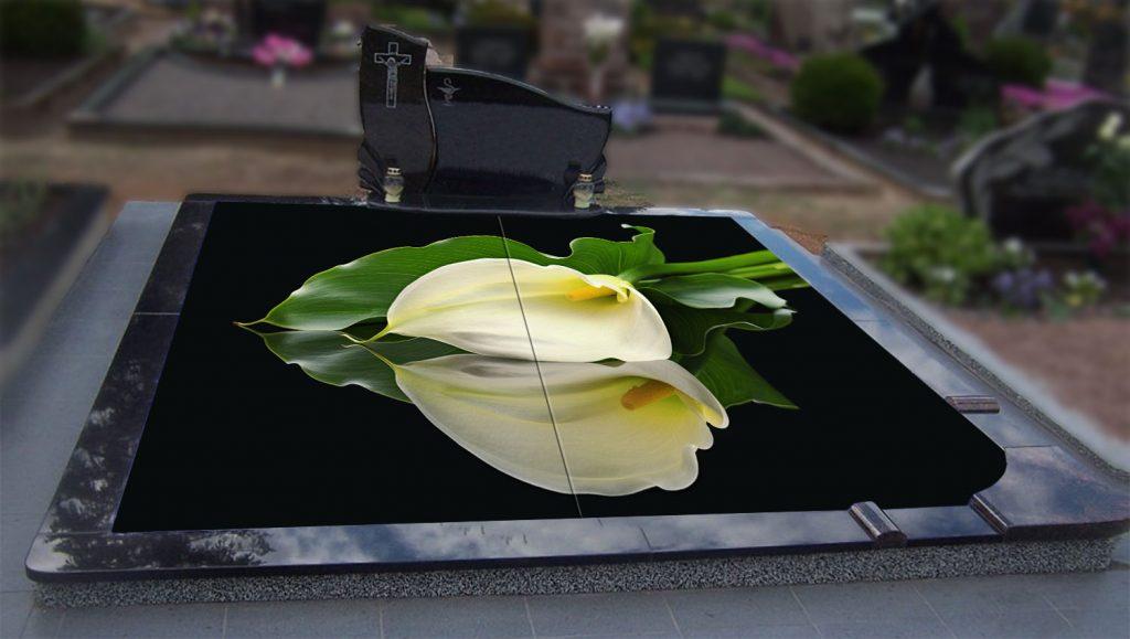 3D gėlės - Kalija tamsiame fone